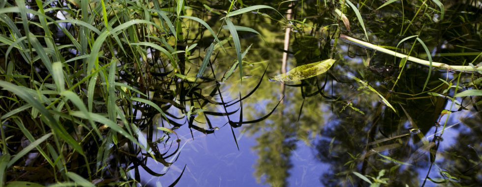 Water and reflections of trees and foliage at the Natural Areas Teaching Lab